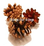 Scotch Pine Cones (10)