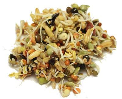 Organic Sprout it Out ~ Sprout Mix