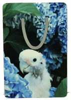 Coco Cockatoo Bookmark Short