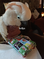 Keiko, The Mutilating Cockatoo Sponsorship